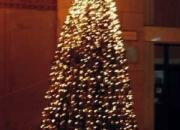 Svjetleca stabla 2